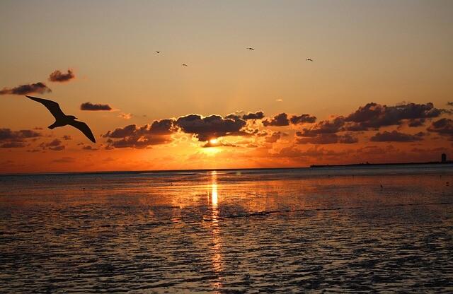 Blick auf das Wattenmeer in Büsum bei Sonnenuntergang